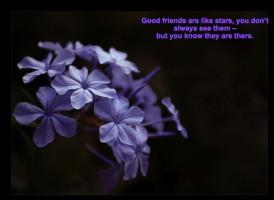 friends fan quote